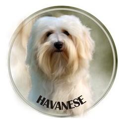 Havaneser