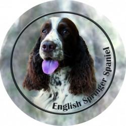 English Springer Spaniel