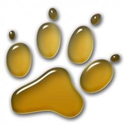 3D Pfote - Gold 30x30 cm