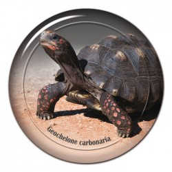 Köhlerschildkröte