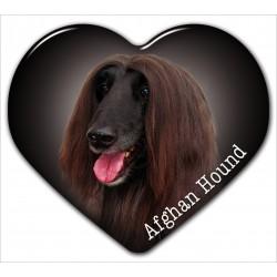 Afghan Hund