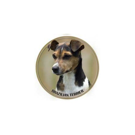 Brasilian Terrier
