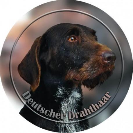 Deutscher Drahthaariger Vorstehhund