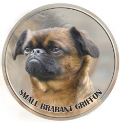Brabant Griffon - Small