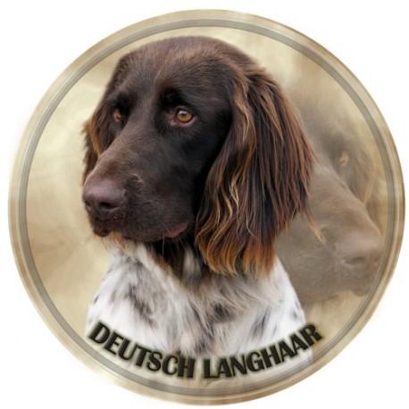 Deutscher Langhaariger Vorstehhund
