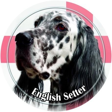 English Setter