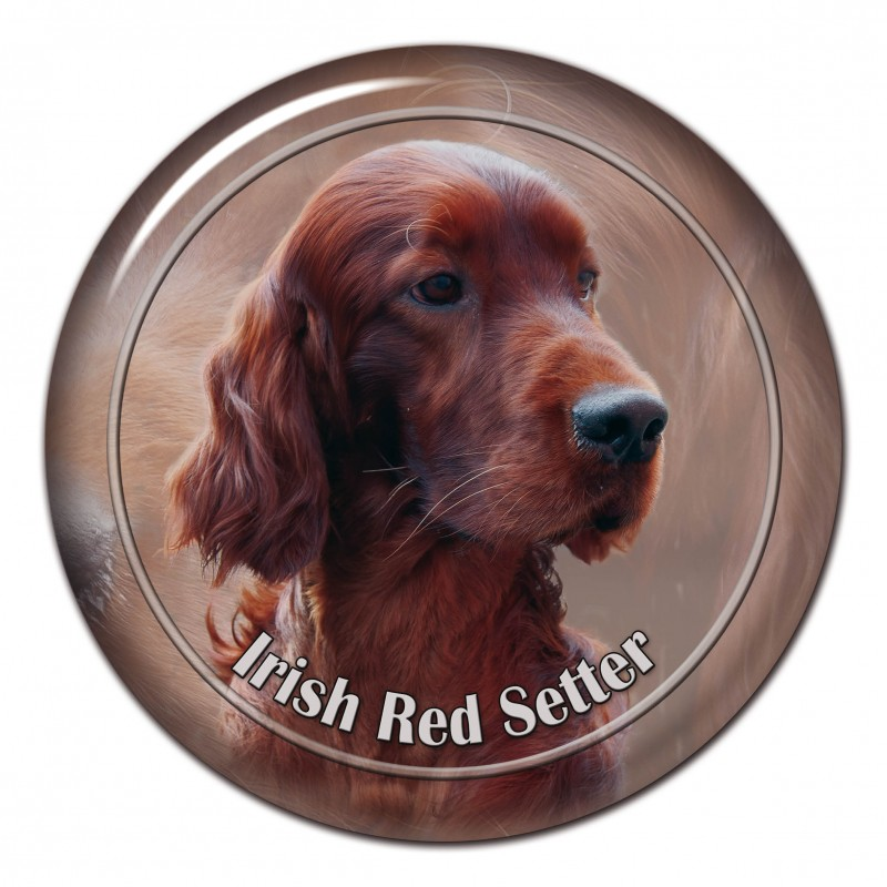 Irish Red Setter