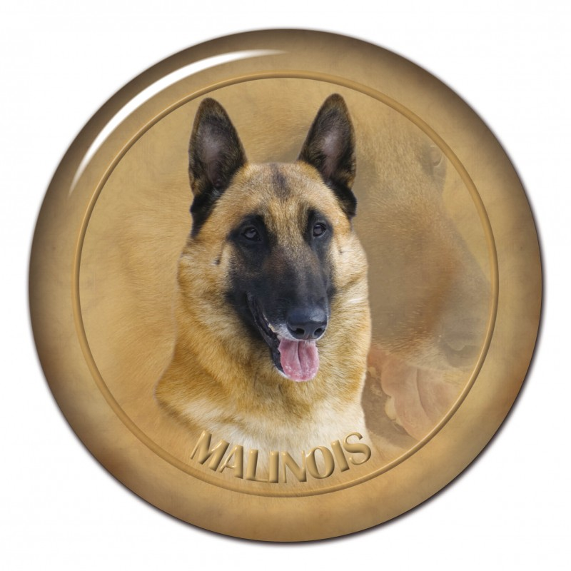 Belgischer Schäfer - Malinois