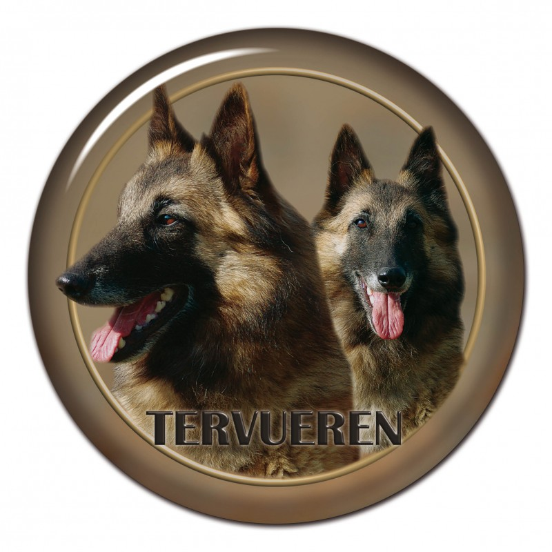 Belgischer Schäfer - Tervueren